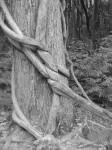 Twisted Tree_edited-1