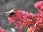 bad-ass-bumble-bee_edited-1