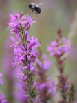 bumble-bee-landing