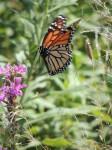 butterfly-landing