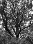 cool-tree