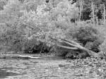 down-tree-ballston-lake