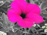 hot-pink-and-white-isolated-color_edited-1