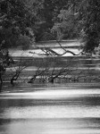 river-picture-bw