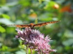 soft-landing-butterfly-flower