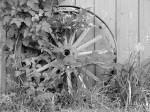 wagon-wheel-cacmpj-farm-bw