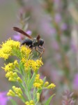 wasp-takeoff