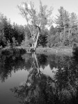 welles-pond-reflection